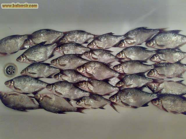 рыбалка в тольятти балансир ком