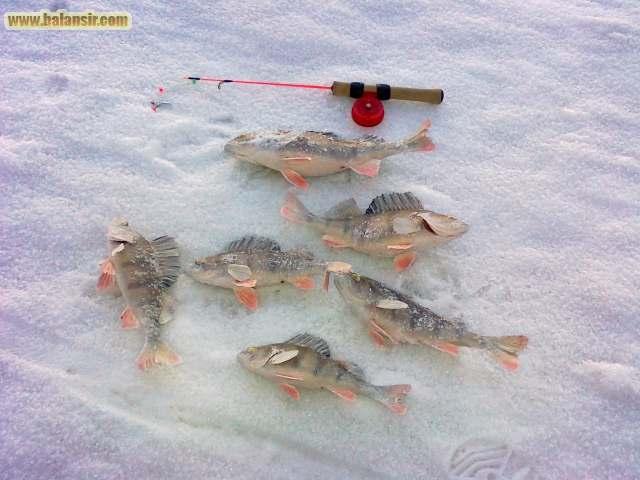 сайты что до  рыбалке на тольятти