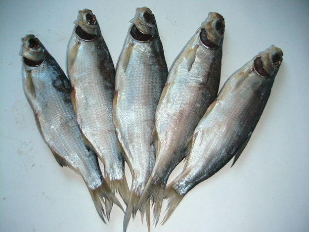 Рыба погибла в домашних условиях - Авто Шарм